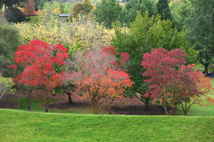 Free Colors Of Autumn Stock Images - 31115334