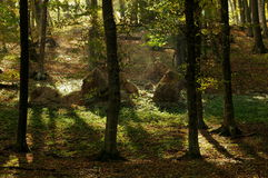 Free Colors Of Autumn In A Landscape In The Forest. Colored Leaves. Autumn Background Stock Photo - 47782360