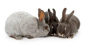 colors olika kaniner tre arkivbild