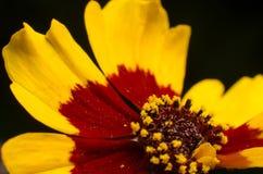 colors orange yellow Arkivfoto