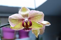 The colors of the orchid royalty free stock photography