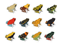 Colors and patterns of poison-dart frogs. A vector study of colors and patterns of various poison-dart frog species (Dendrobates vector illustration