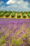 Colors of Provence Royalty Free Stock Images