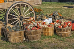 The Colors Of Pumpkin Farm Stock Image