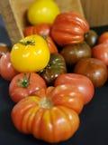 colors röd tomatyellow för heirloom royaltyfria foton