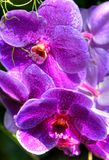 Colors of the rain-forest. Macro of a orchid in the rain-forest Royalty Free Stock Photography