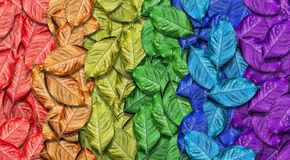 Colors of rainbow. Multicolored fallen autumn leaves texture background. Abstract pattern of bright leaves. royalty free stock images