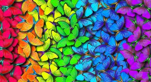 Colors of rainbow. Pattern of multicolored butterflies morpho, texture background. vector illustration