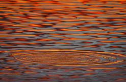 Colors reflected in the water at dawn. Spectacular colors reflected in the water at the dawn of a cold winter day Royalty Free Stock Photos