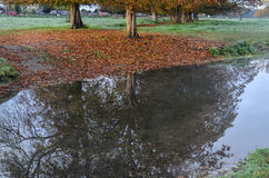 Colors and reflections of autumn Royalty Free Stock Photo