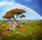 colors regnbågen arkivfoto