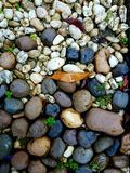 Colors of rocks. The colors and textures of rocks with green leaf Stock Photo