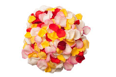 Colors of rose petals. Different Colors of petals isolated with white background Royalty Free Stock Image