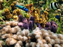 Colors of the sealife in the Caribbean sea. Colorful coral reef with sea-sponges and tropical fish, Caribbean sea, Bocas del Toro, Panama Stock Photos