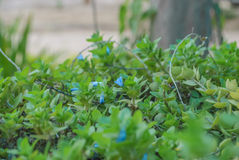 Colors season of flower. Colors season of blue flower Stock Photography