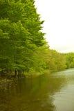 colors skoggreen dess berg som reflekterar vatten för spain fjädertrees Fotografering för Bildbyråer
