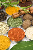 Colors of spices Stock Photography