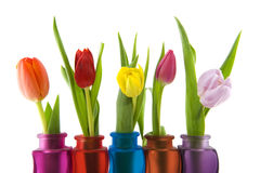 Colors in spring Royalty Free Stock Photo
