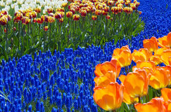 Colors of spring Royalty Free Stock Image
