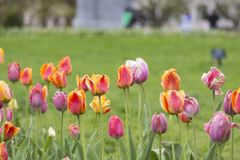 Colors of Spring. In Boston Garden Stock Photo