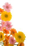 Colors of summer Royalty Free Stock Images