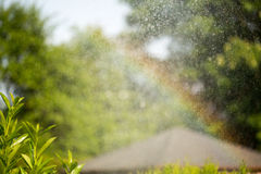 Colors of summer in the garden after watering. rainbow Royalty Free Stock Photo