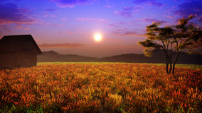 Colors Of The Sunset Field Royalty Free Stock Photo