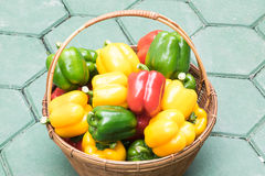 Colors of sweet peppers Royalty Free Stock Image