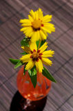Colors on the table. Yellow flowers on a garden table Royalty Free Stock Photo