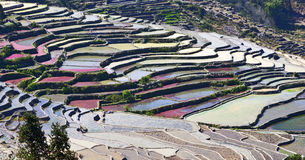 Colors of the Terraces. Different colors of algae and water decorate each terrace in Yuanyang in southern Yunnan province in China Stock Photography