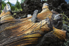 Colors and Textures on Fallen Log Stock Images