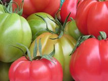 Colors of the tomato Stock Images