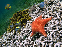 Colors of underwater world Royalty Free Stock Photos