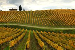 Colors of Wineyards in Tuscany, Chianti, Italy. Wineyards in Tuscany, vinegrapes, and leaves vine. Chianti region, in Tuscany, Italy royalty free stock photos