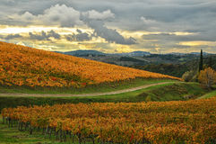 Colors of Wineyards in Tuscany, Chianti, Italy. Wineyards in Tuscany, vinegrapes, and leaves vine. Chianti region, in Tuscany, Italy stock photos