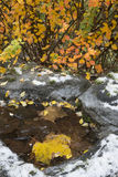 The colors of winter. A dusting of early snow decorates a frozen birdbath with bright fall leaves in the background Royalty Free Stock Photo