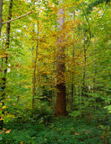 Colors in the wood. A tree and leaves of different colors in a wood Stock Photos