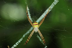 The colors are woven spider Royalty Free Stock Images