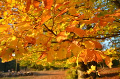 Colorsw d'automne Image libre de droits
