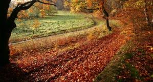 Colorul Wald lizenzfreies stockfoto