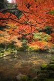 Colos van het de herfstseizoen in Kyoto Japan stock fotografie