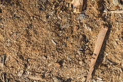 Colose up of texture of sawdust Stock Photo