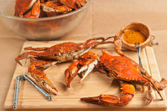 Colossal, steamed and seasoned chesapeake blue claw crabs Royalty Free Stock Image