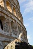 colosseo Ρώμη Στοκ Φωτογραφίες