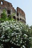 colosseo Италия rome Стоковое фото RF
