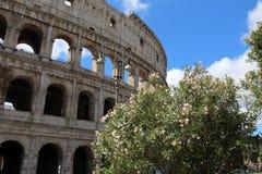 Colosseo da Roma Fotografia Stock