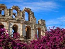 Colosseum在罗马 免版税图库摄影