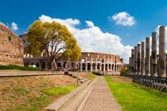 Colosseum大视图在一个夏日期间的 免版税库存照片