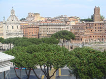 colosseum意大利罗马 看法通过柏树 库存图片