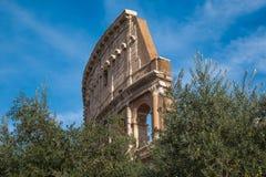 Colosseum στις ελιές στο κέντρο της Ρώμης Στοκ Φωτογραφία